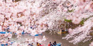 Du lịch Nhật Bản mùa xuân